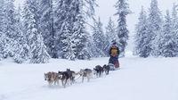 Bli hjemme i vinterferien