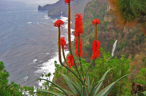 Blomsterrika Madeira