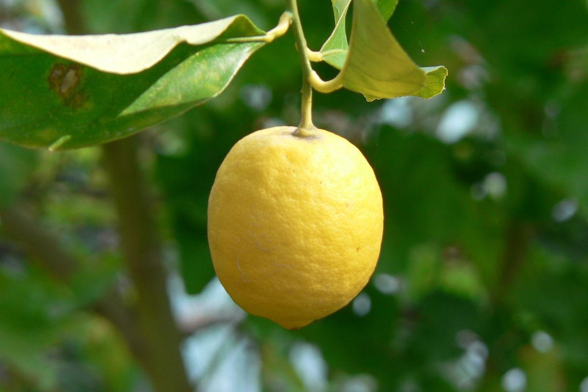 Citron i Aten.