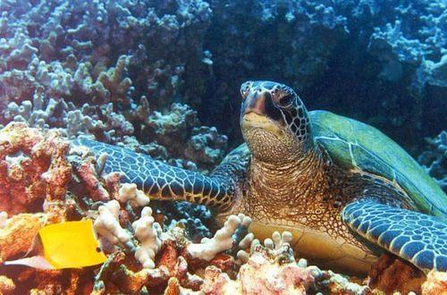 Mauritius dyk!