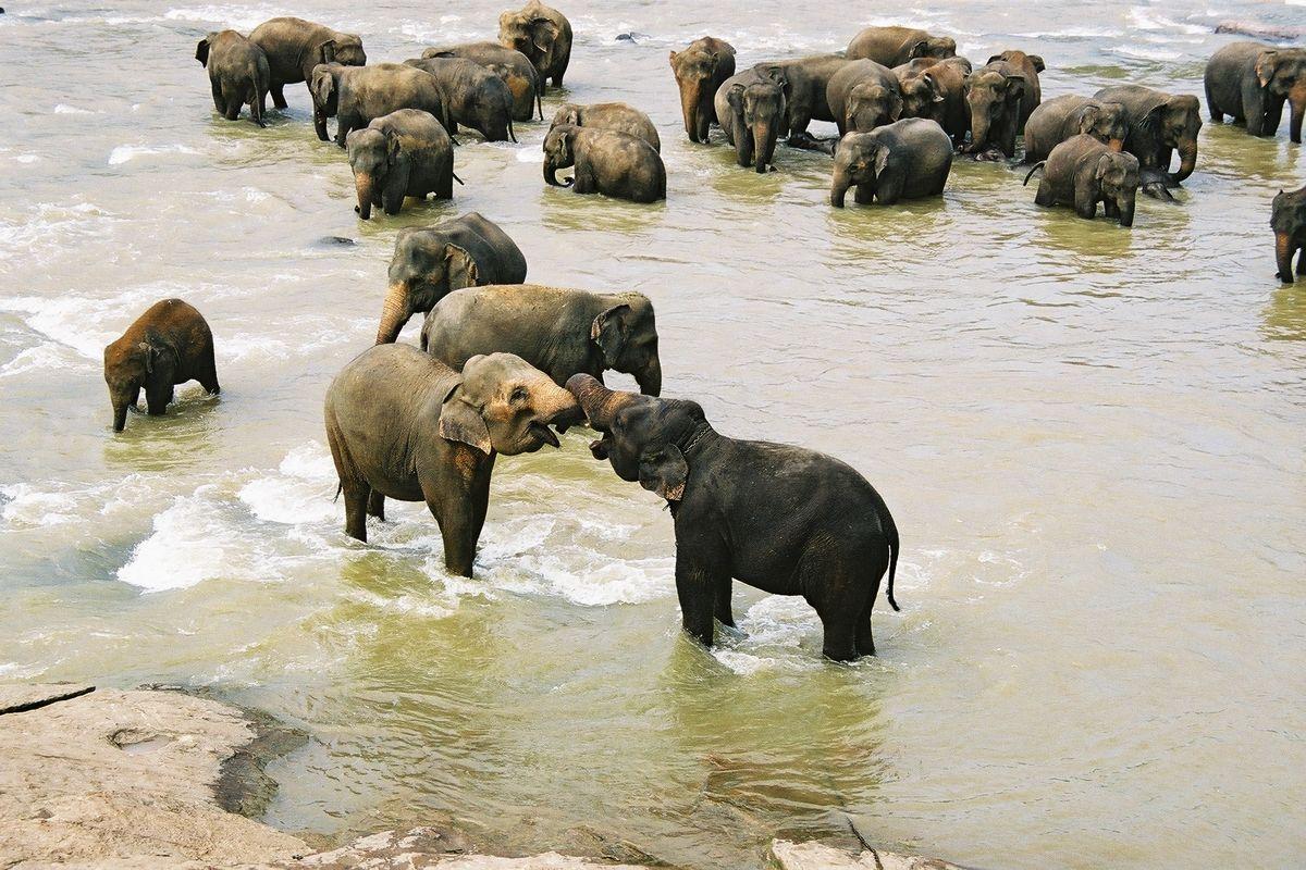 Badande elefanter