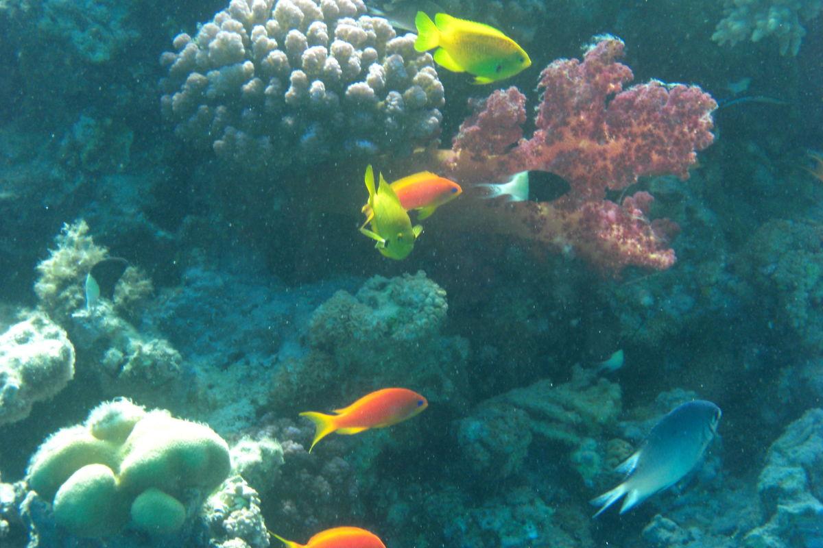 Fiskar under vatten